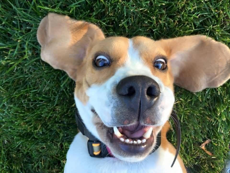 Este usuario fue ingenioso a la hora de respetar la cuarentena sin olvidarse de hacer feliz a su perro